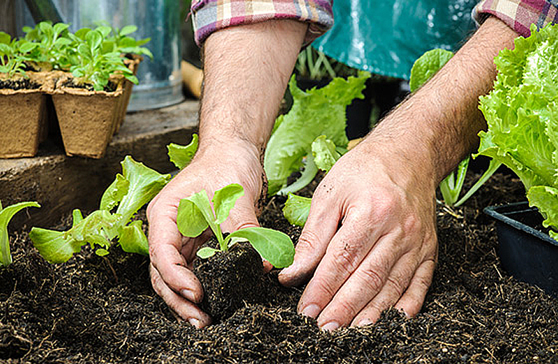 Vermehrung Von Pflanzen Anzucht Aus Samen Kreativ Welt De